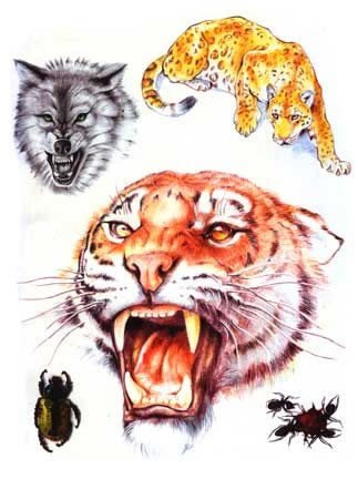 Эскизы татуировок - Кошки