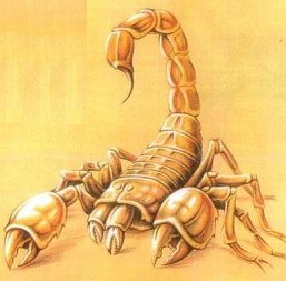 Татуировки скорпиона
