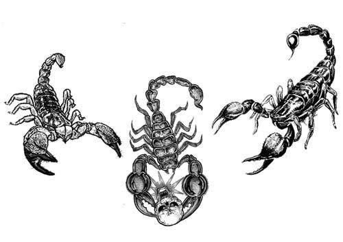 Татуировки скорпиона — эскизы